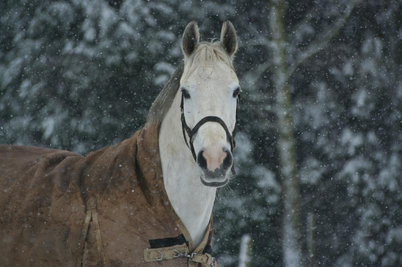Horse rug in winter
