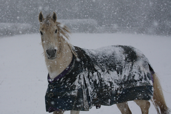 Winter horse rug